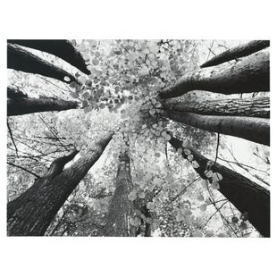 Forest Blossom Wall Art