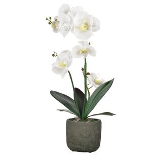 White Faux Orchid