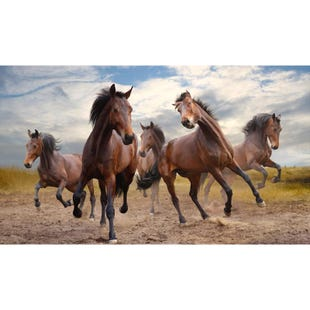Horses in Motion 36x48 Canvas