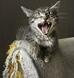 Furniture Protection Plan - Accidental Damage